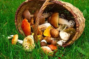 frische champignons haltbarkeit